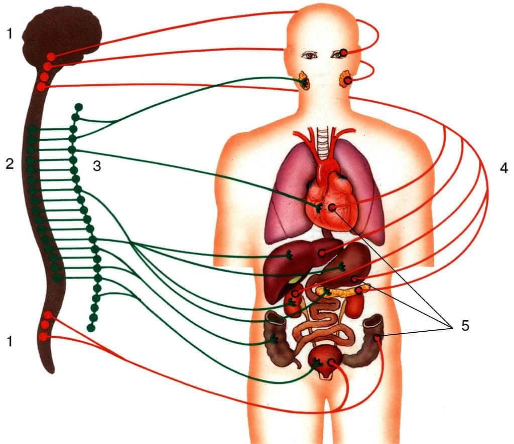 Вегетативные расстройства